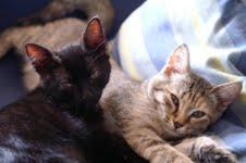 Felix e Kitty