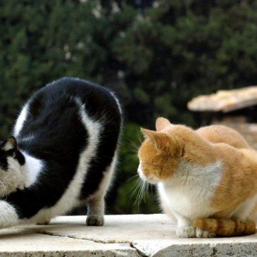 La scelta del secondo gatto