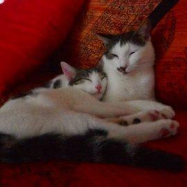 Micia e Bijoux