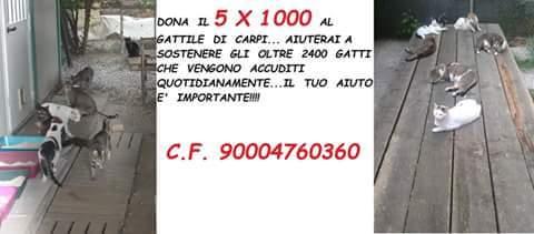 17425109_1481791945173984_3954581260374284399_n