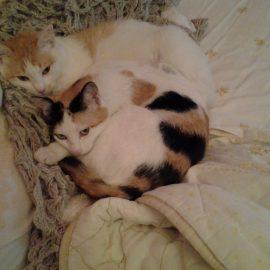 Gatto Verde e Gatto Bianco