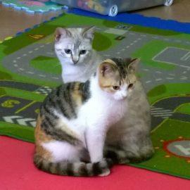 Lidia e Raffaella