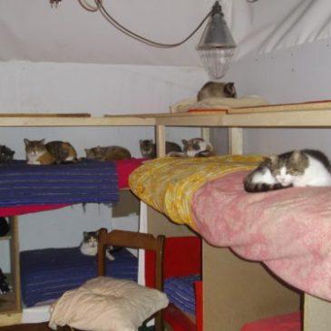 Carpi, boom di micini abbandonati al gattile