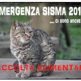 EMERGENZA TERREMOTO IN CENTRO ITALIA : AIUTIAMOLI!!