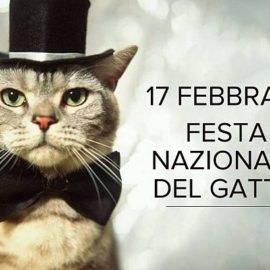 Festa del Gatto: vietato mancare!