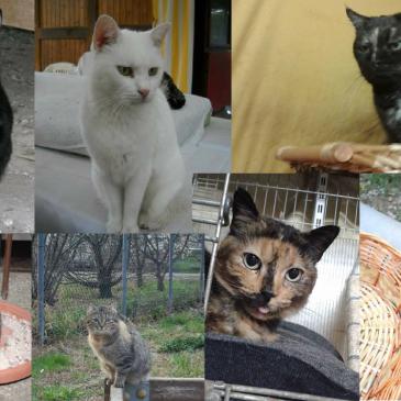 8 marzo : un augurio a tutte le donne…e le gatte!