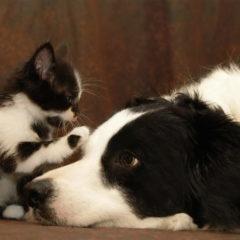 Raccolta alimentare per Gattile e Canile